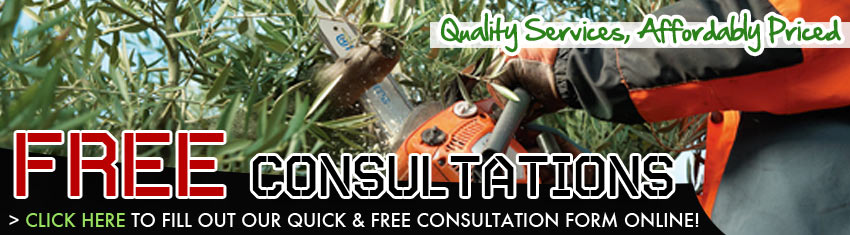 Tree Removal Slidell