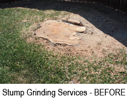 Stump Grinding Mandeville