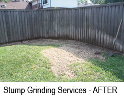 Stump Grinding Madisonville