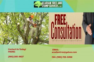 Stump Grinding Service in Slidell