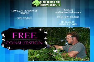Tree Removal Madisonville