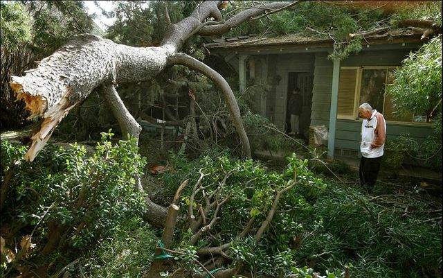 Tree Removal in Louisiana