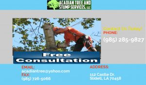 Tree Removal Mandeville